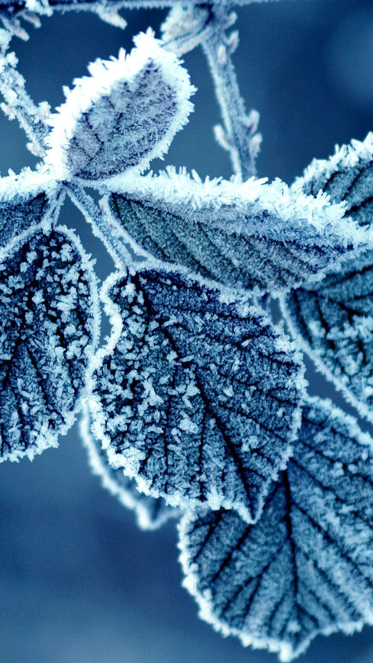 Cold-Winter-Morning-Frost-Leaves-nature-iphone-6-wallpaper